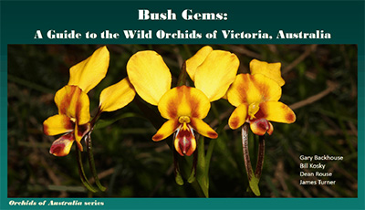 how to grow orchids in australia