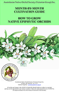 Epiphyte Month by Month Guide